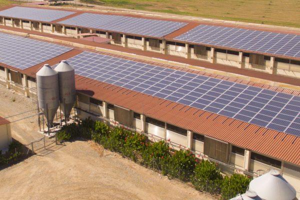 pannelli fotovoltaici in agricoltura