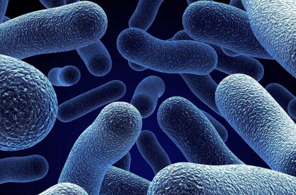 Bakterien, die Sonnenenergie erzeugen